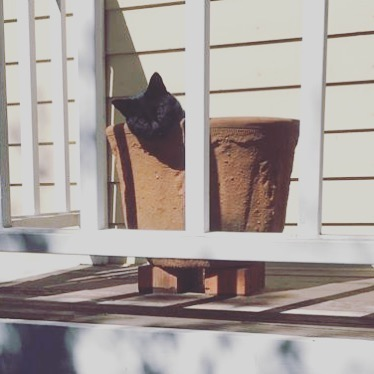 #caturday kitty in a pot 😊#cat #blackcat #woofloveblog
