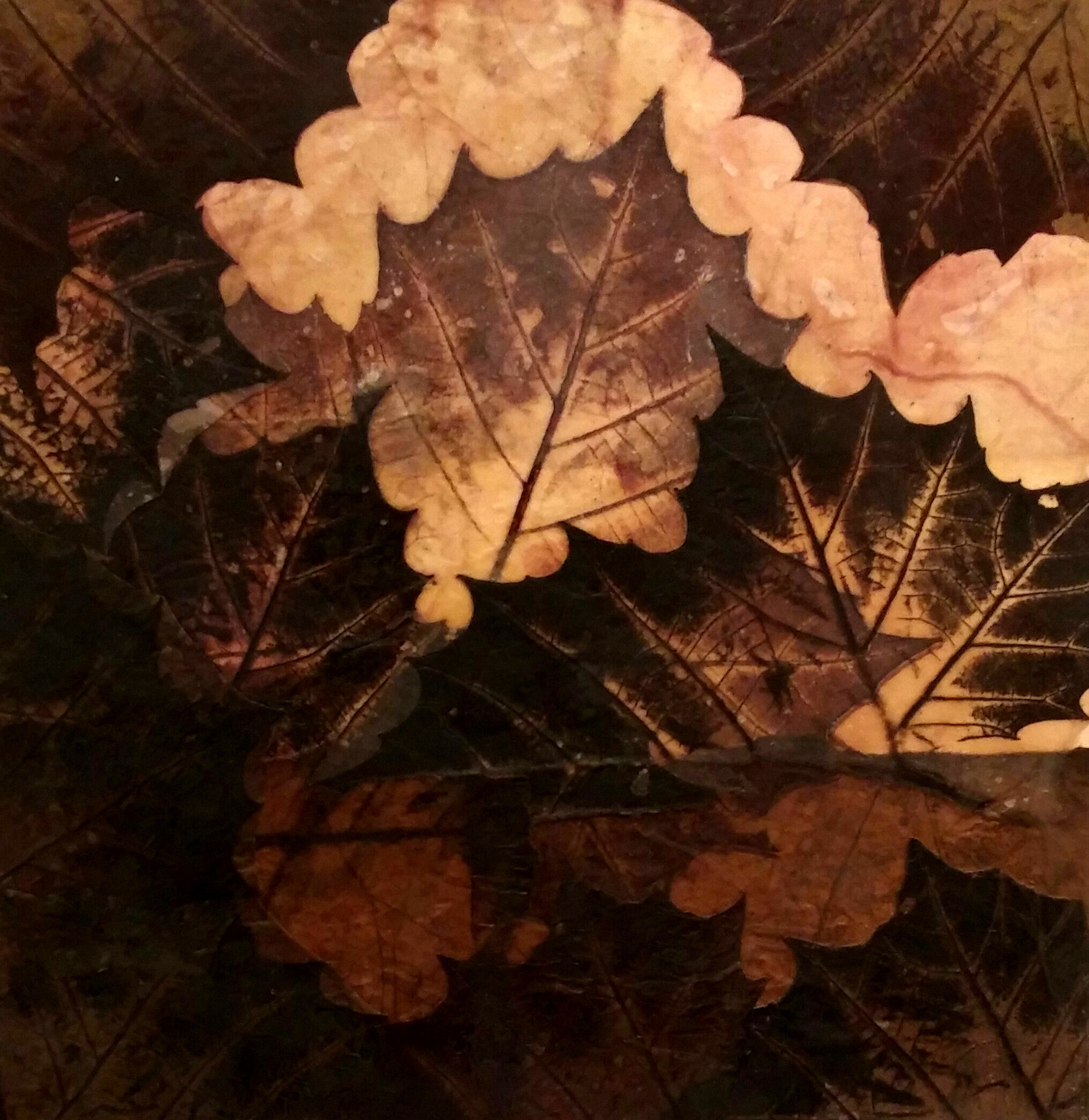 Atkinson 12x12 leaves.jpg