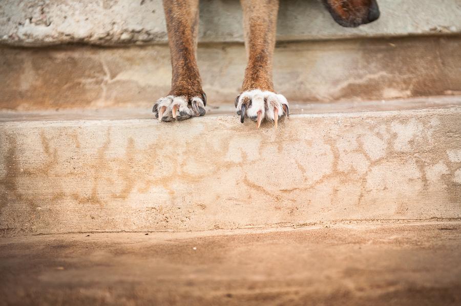 dog-photography-austin-texas-003.jpg