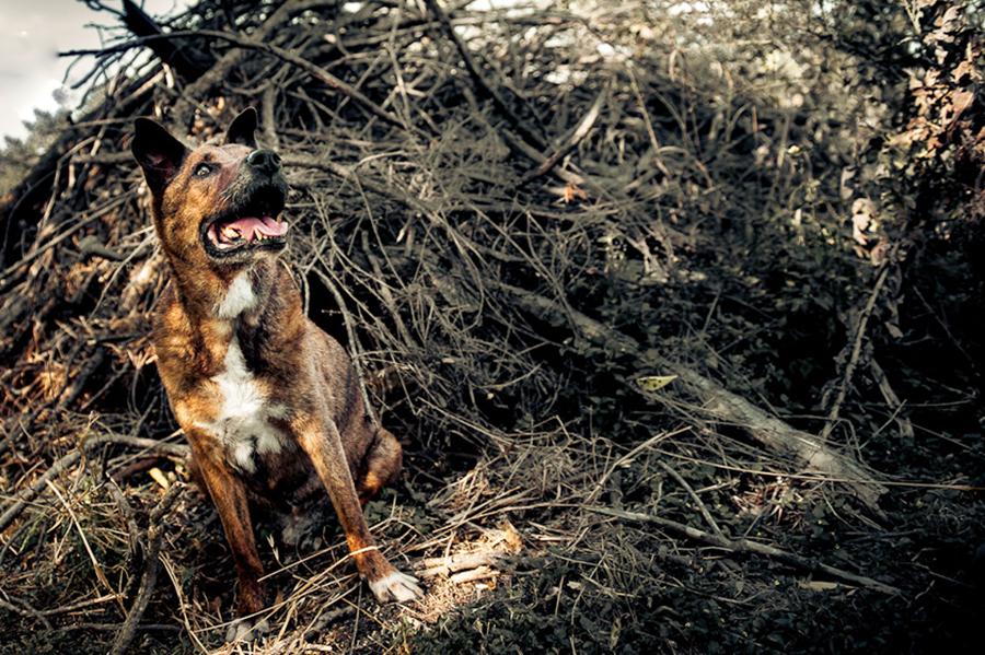 dog-photography-austin-texas-0081.jpg