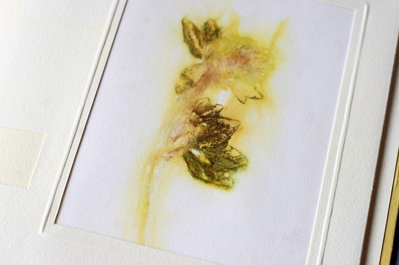 natalie stopka: botanica