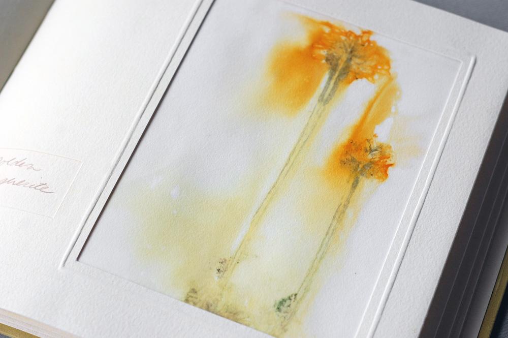 eco print, mounted in album