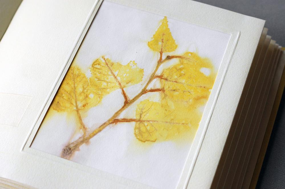 birch eco print