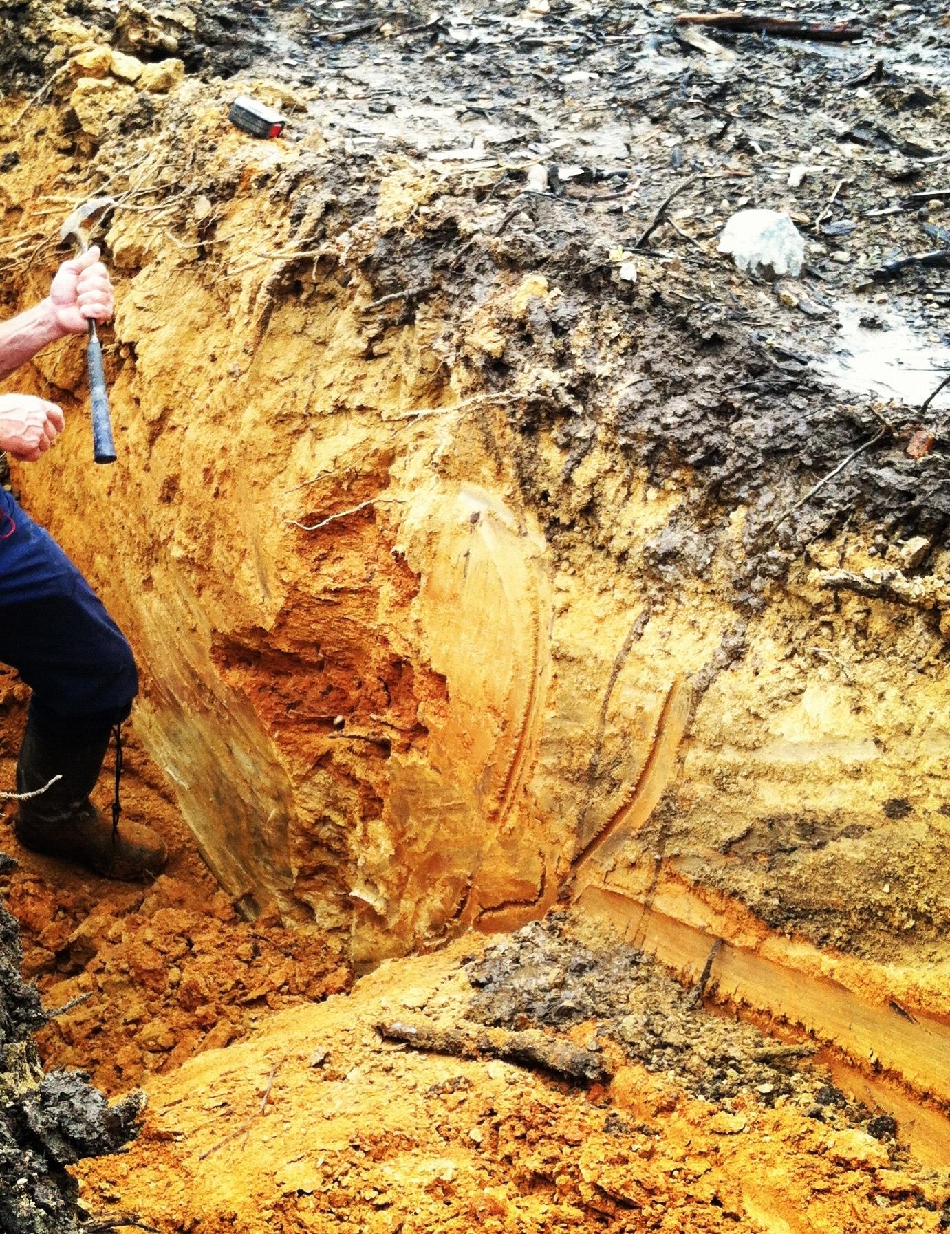 Clonal, Trellis, and Soil Studies