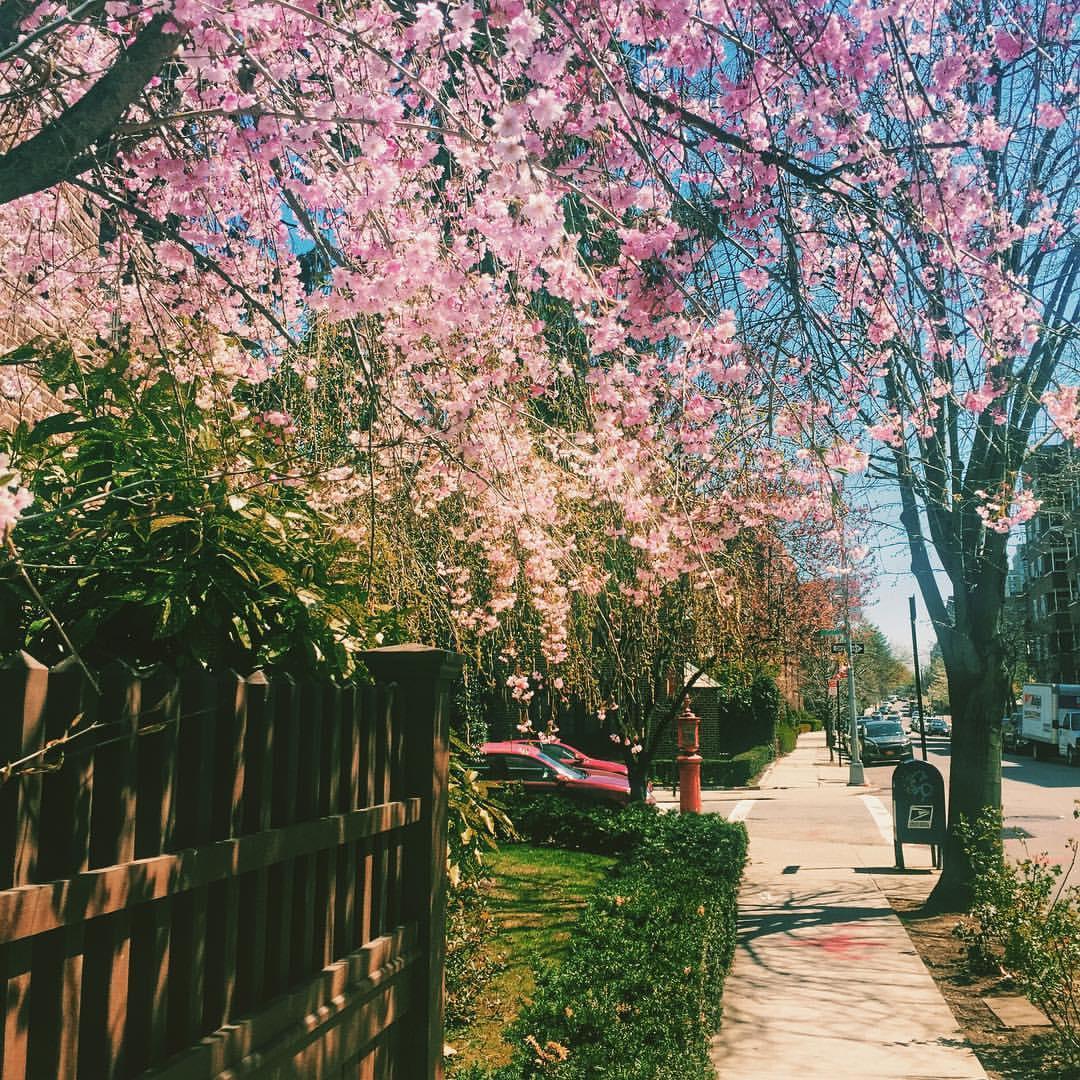 Such a beautiful day in Forest Hills.                #queenscapes #queensnyc #foresthills #foresthillsny #foresthillsqueens #queenslove #springtimeinqueens #heartofqueens  (at Ehrenreich-Austin Playground)