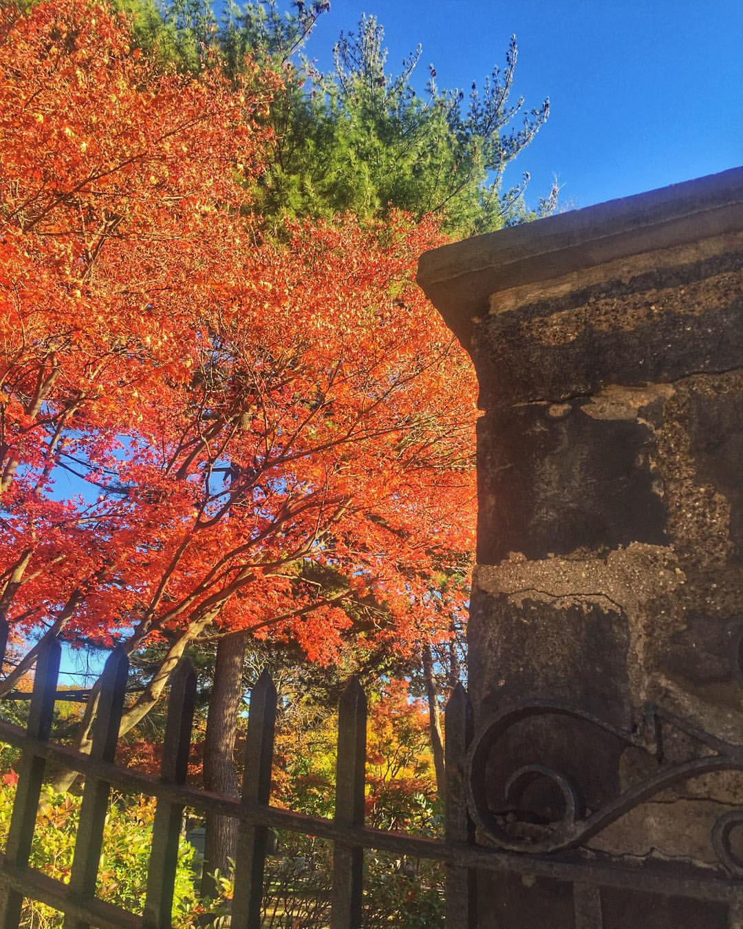 Beautiful day in Kew Gardens.  Usually cemeteries creep me out but the front of this one is so pretty right now - during the day. 🍁🍂(at Maple Grove Cemetery