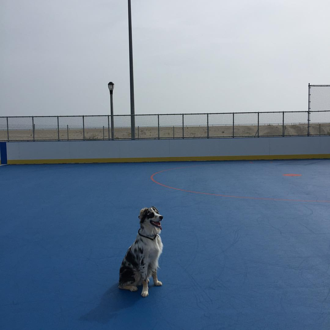 Here is Finley ready to play some hockey at the renovated 108th street rink in Rockaway.