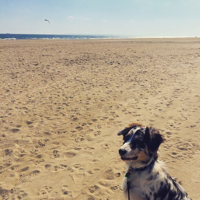 Finley enjoying this beach weather in #rockaway via @lizzygilly23 #queens #heartofqueens  (at Rockaway 118 Street)