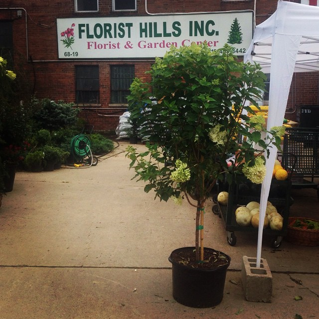 Quick stop at Florist Hills for some peaches! #regopark (at Florist Hills & Garden Center)