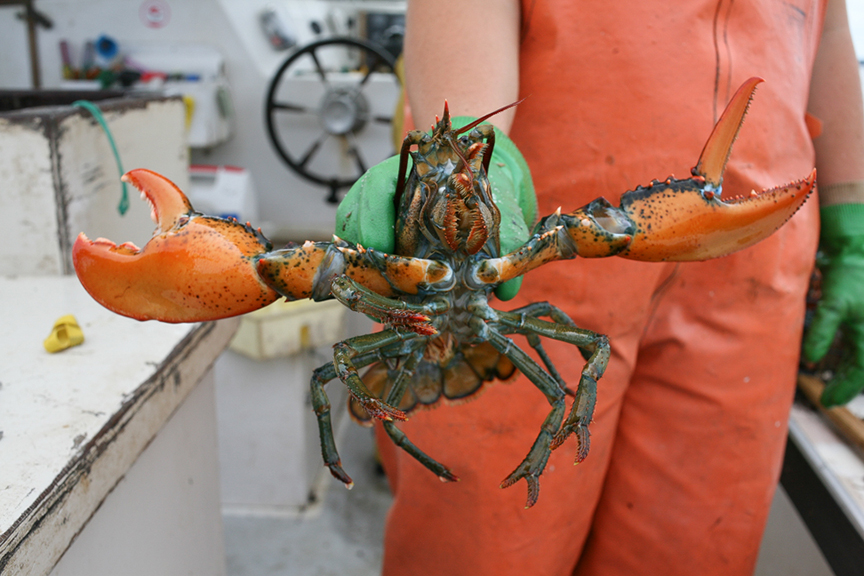 """The """"Jesus lobster,"""" Little Cranberry Island"""
