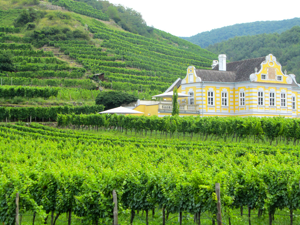 Durnstein Vineyards
