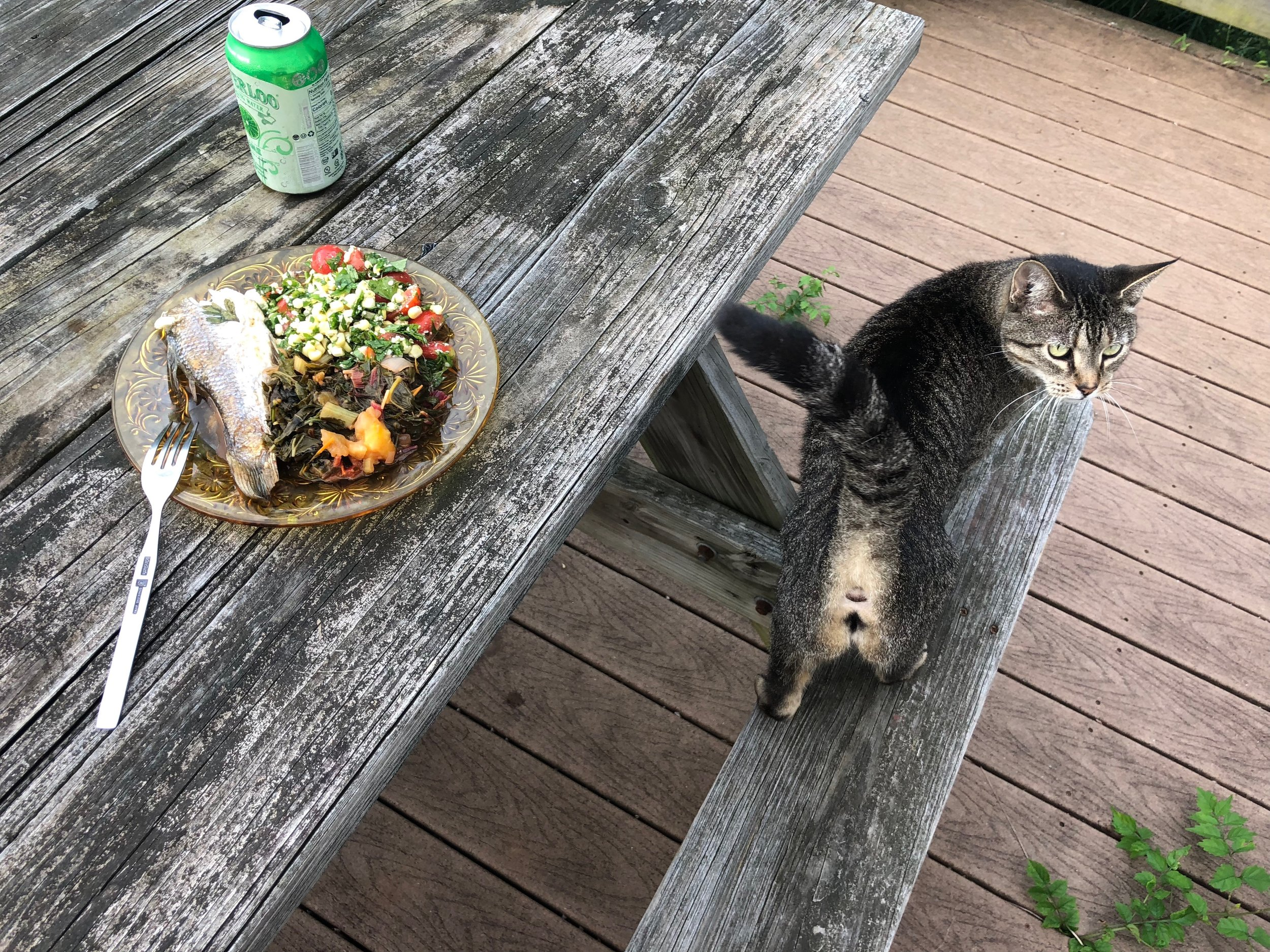 corn salad, fish greens, cat.jpg