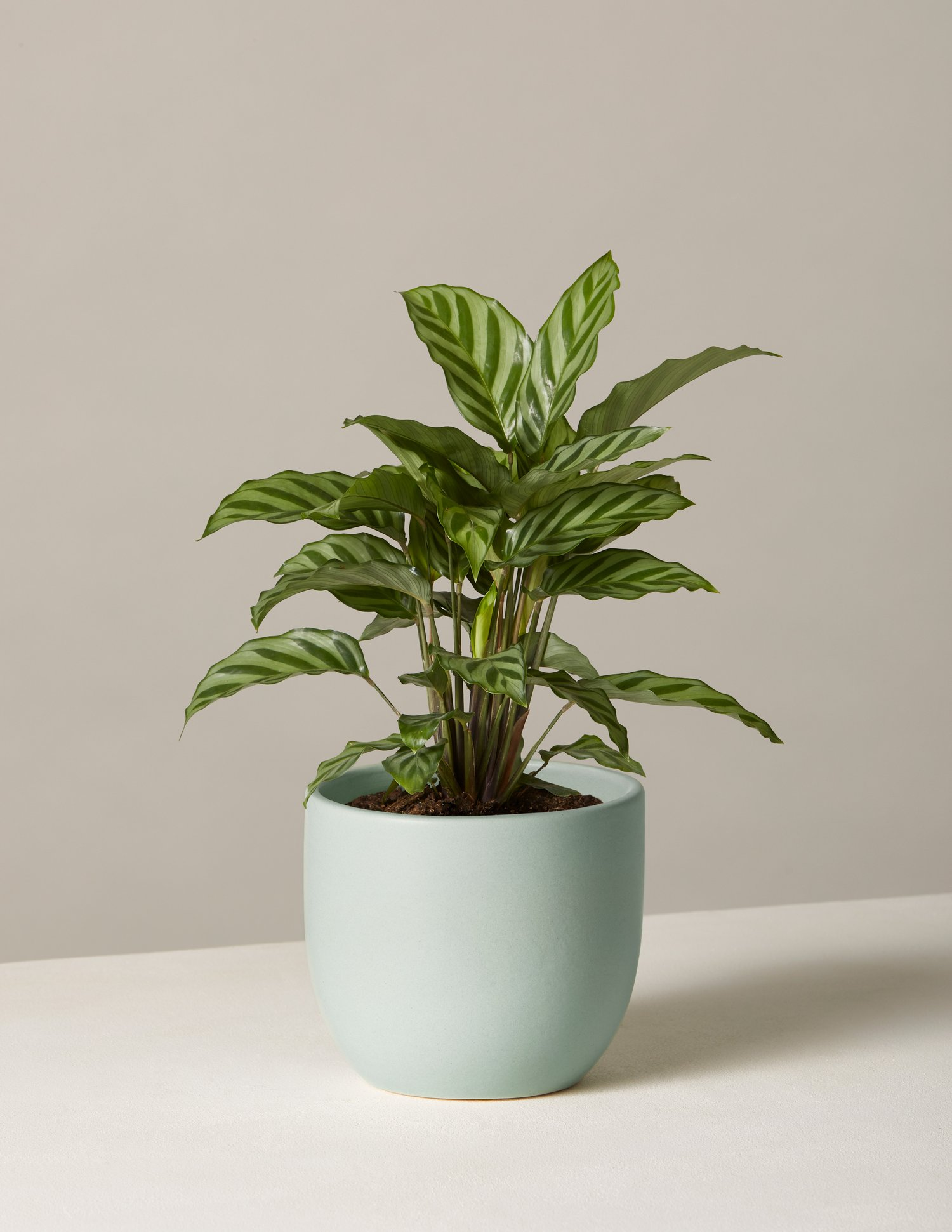 Sill Indoor Potted Plants -