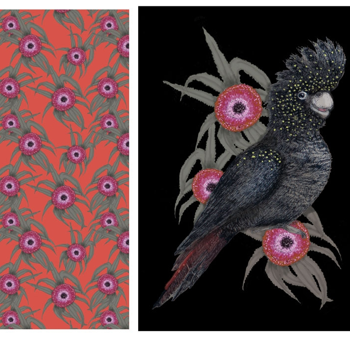 Black Cockatoo and Waratah Collection