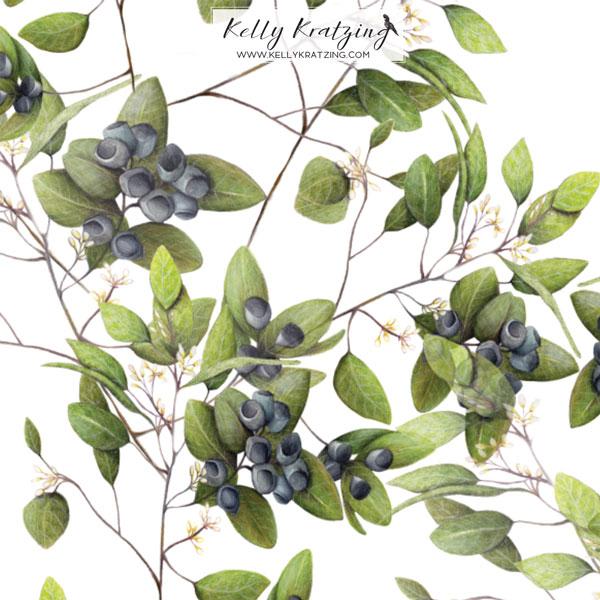 Kelly-Kratzing-Eucalyptus-Buds_white.jpg