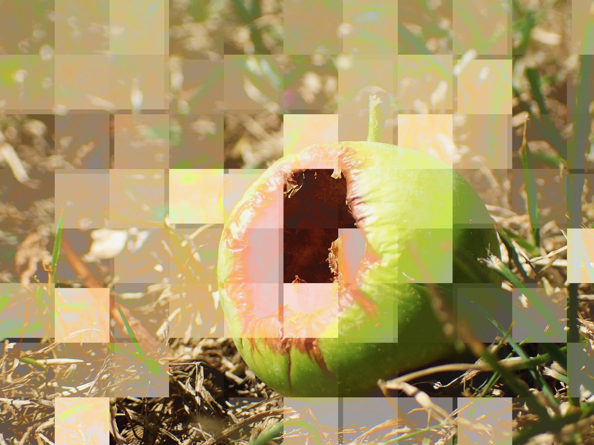 Original Images: Pixabay. Glitched @ Kulturpop