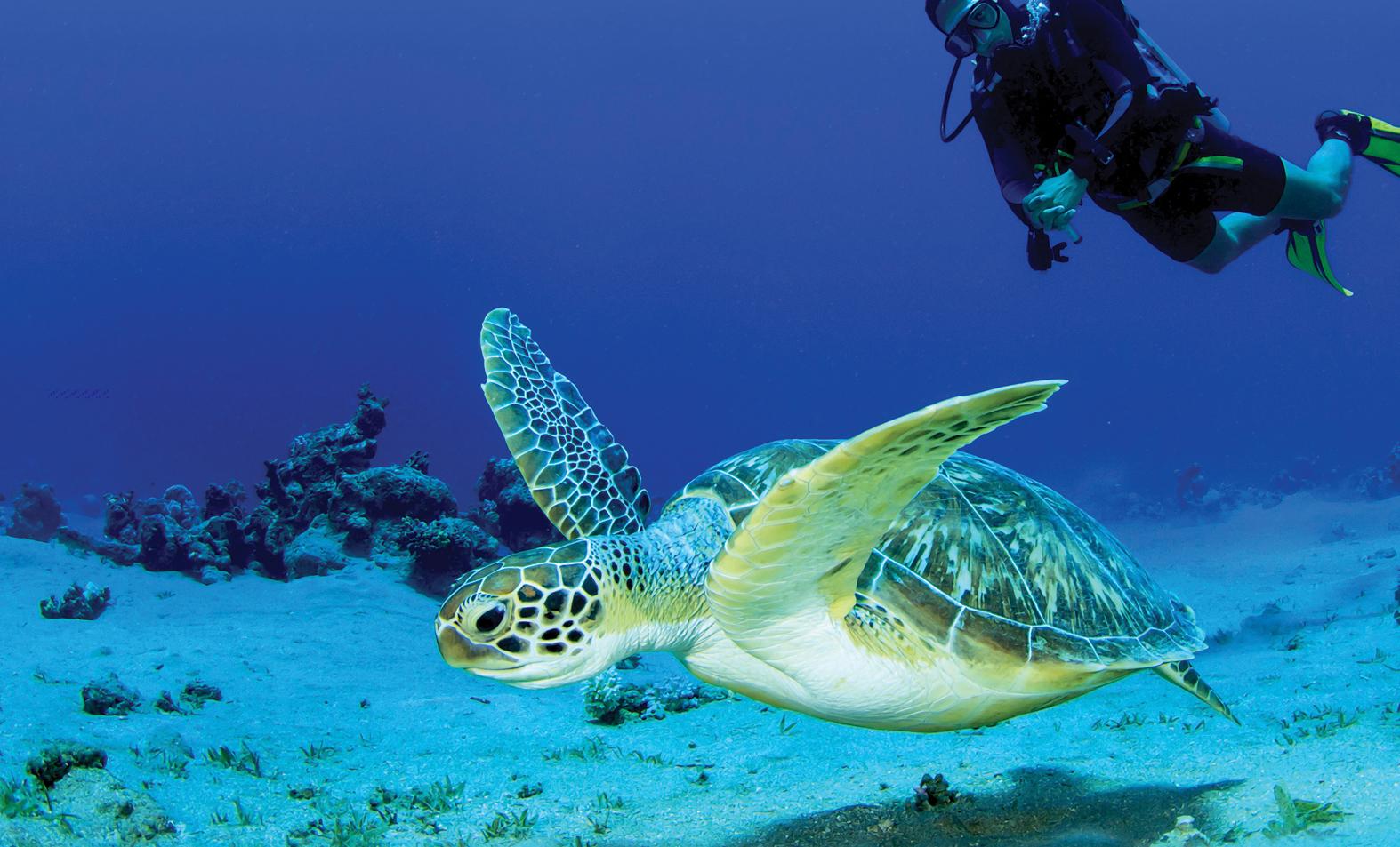 Swim with the locals!