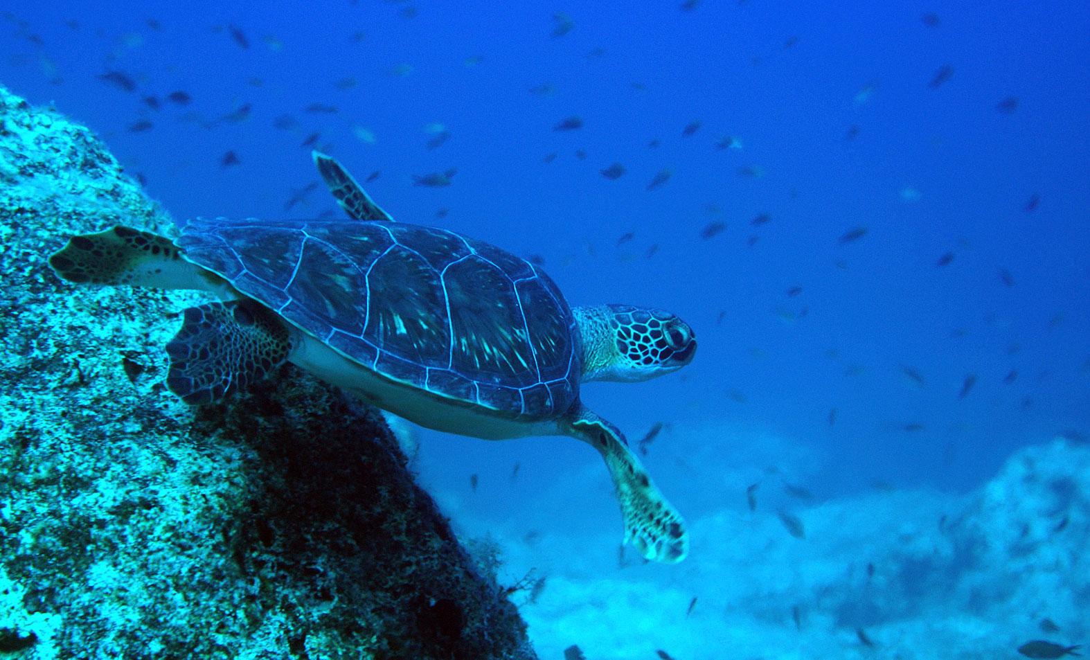 kyrenia-banner-turtle.jpg