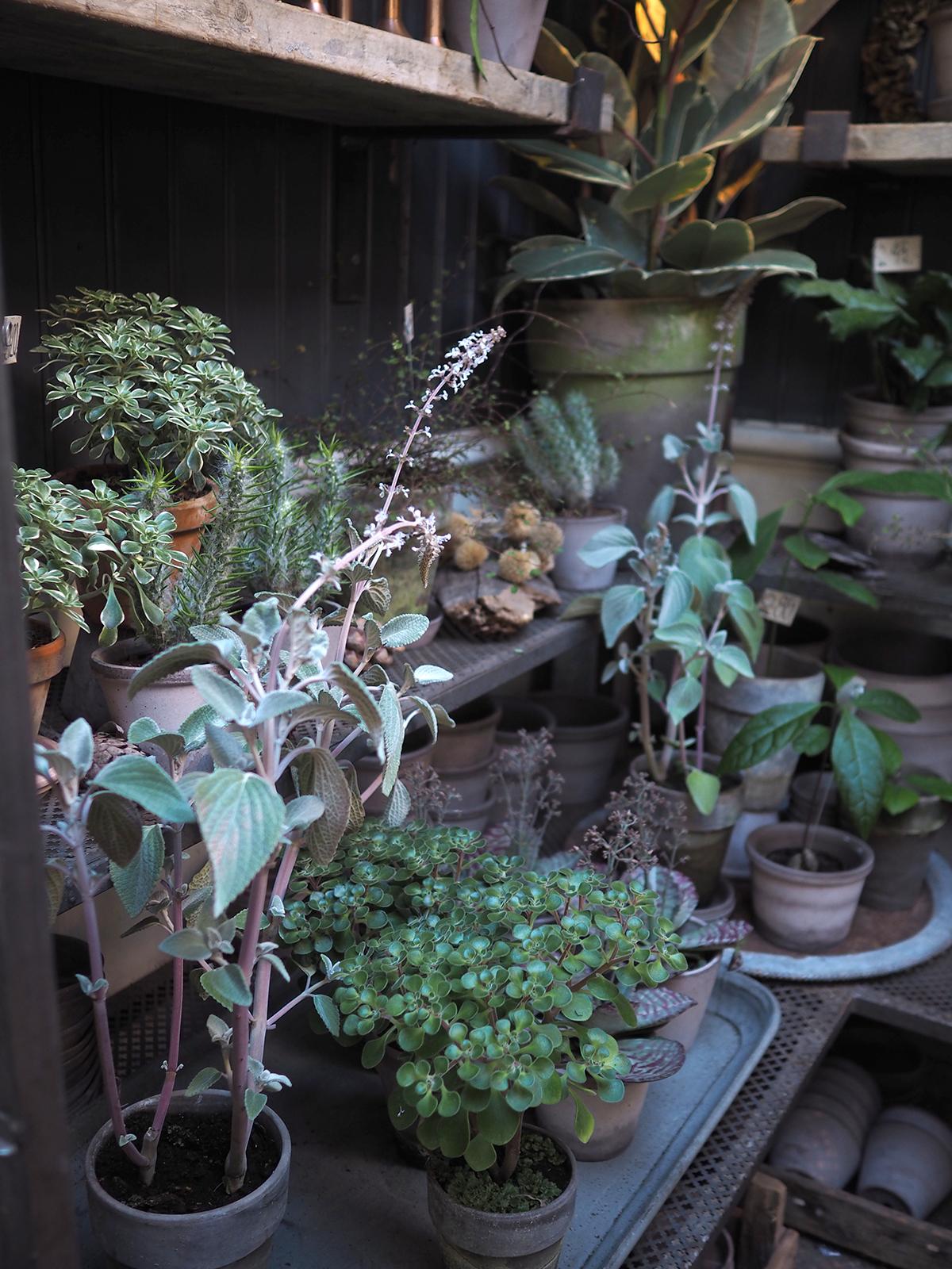 flower shop copenhagen