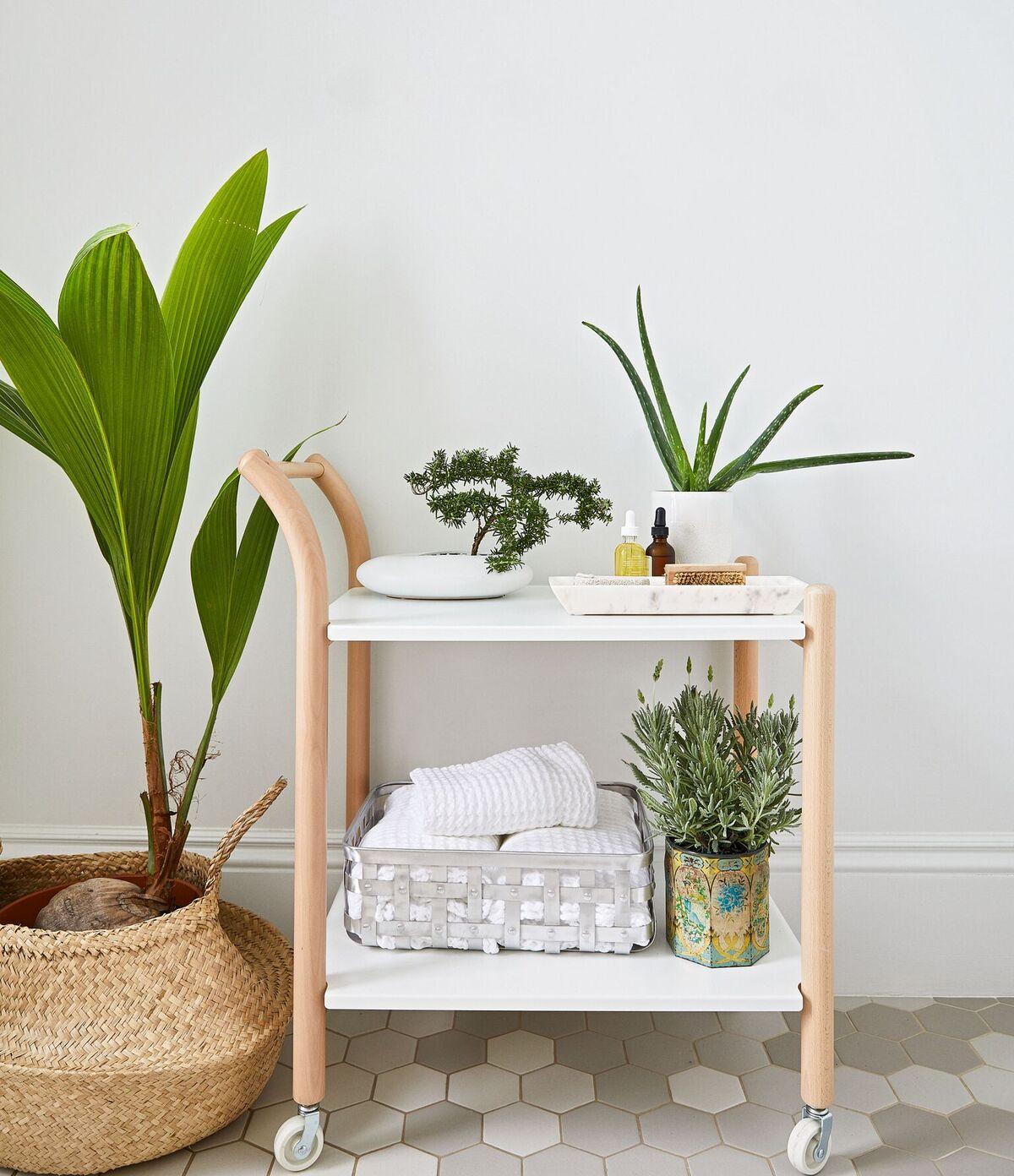 houseplants for the bathroom