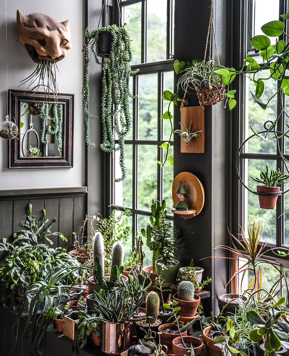Hilton Carter's plant filled home