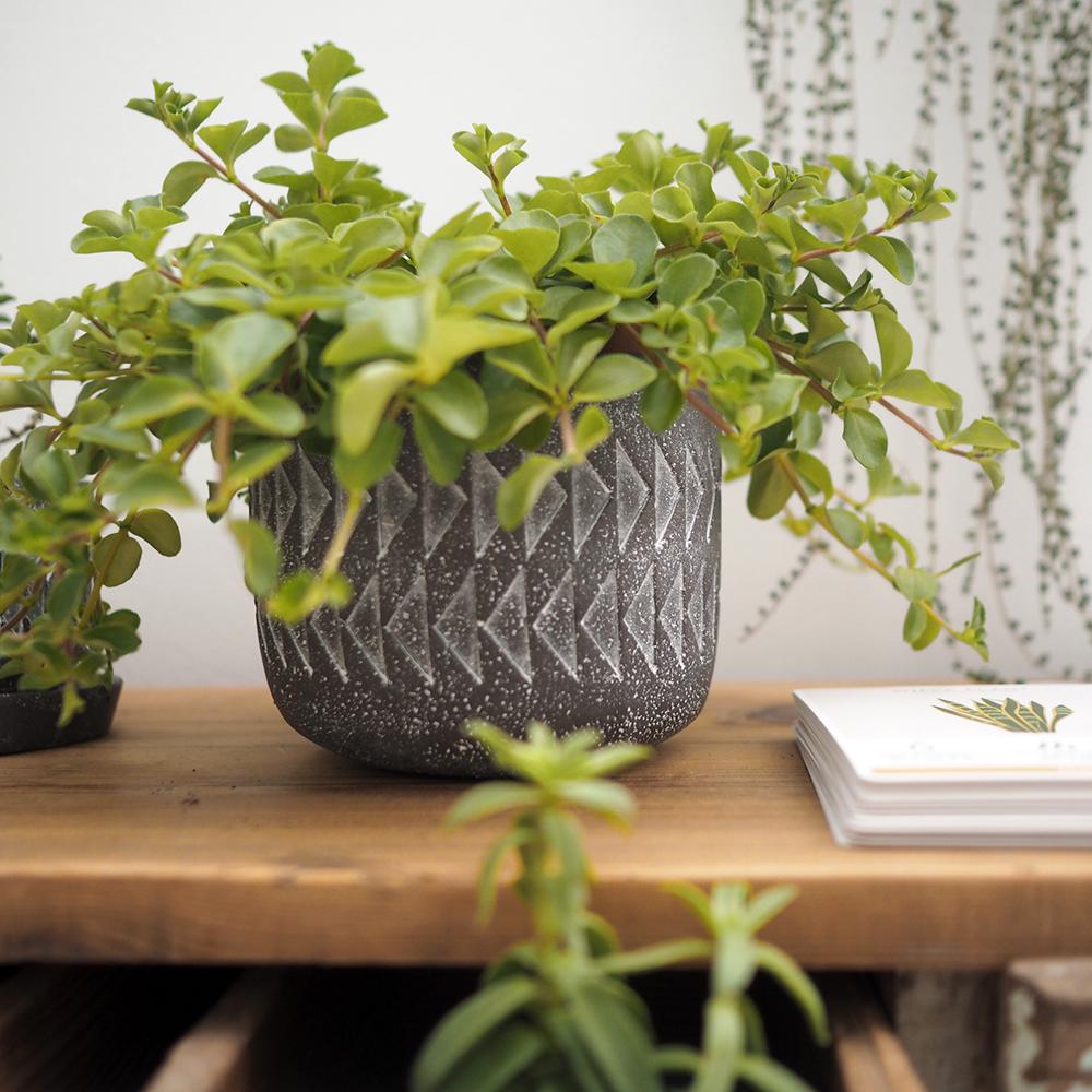 Aztec plant pot