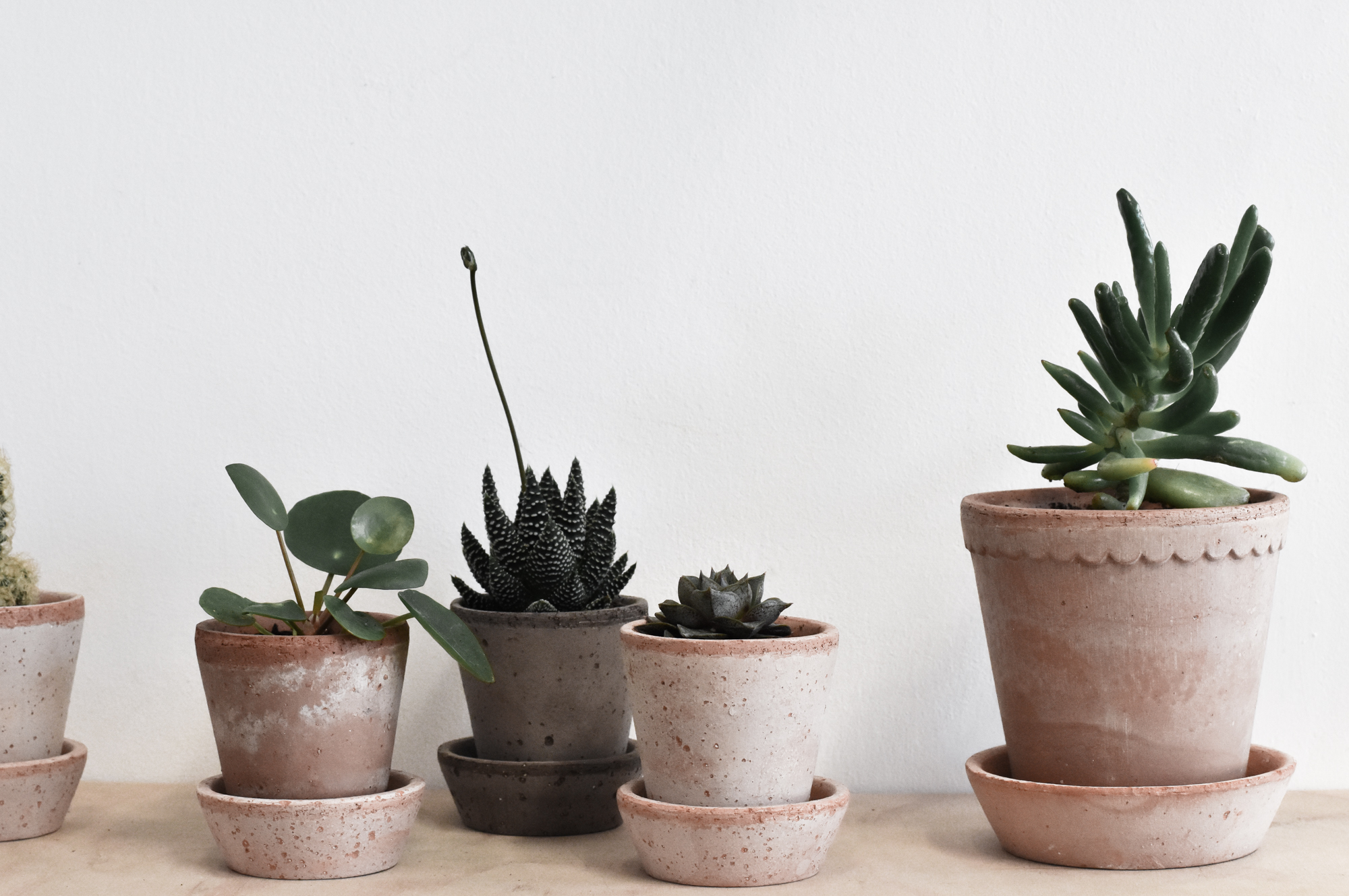plantpots.jpg