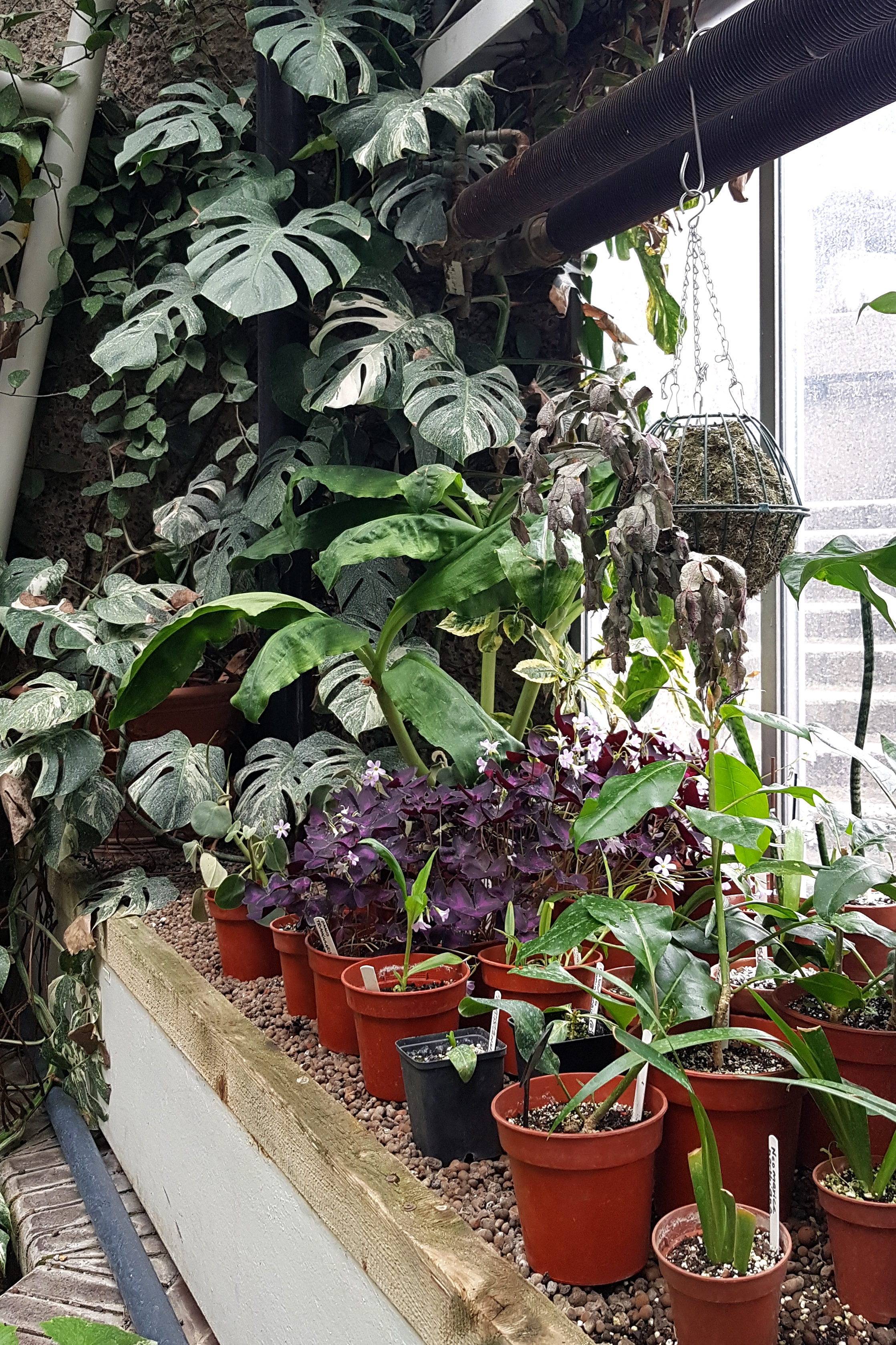 Barbican conservatory, London