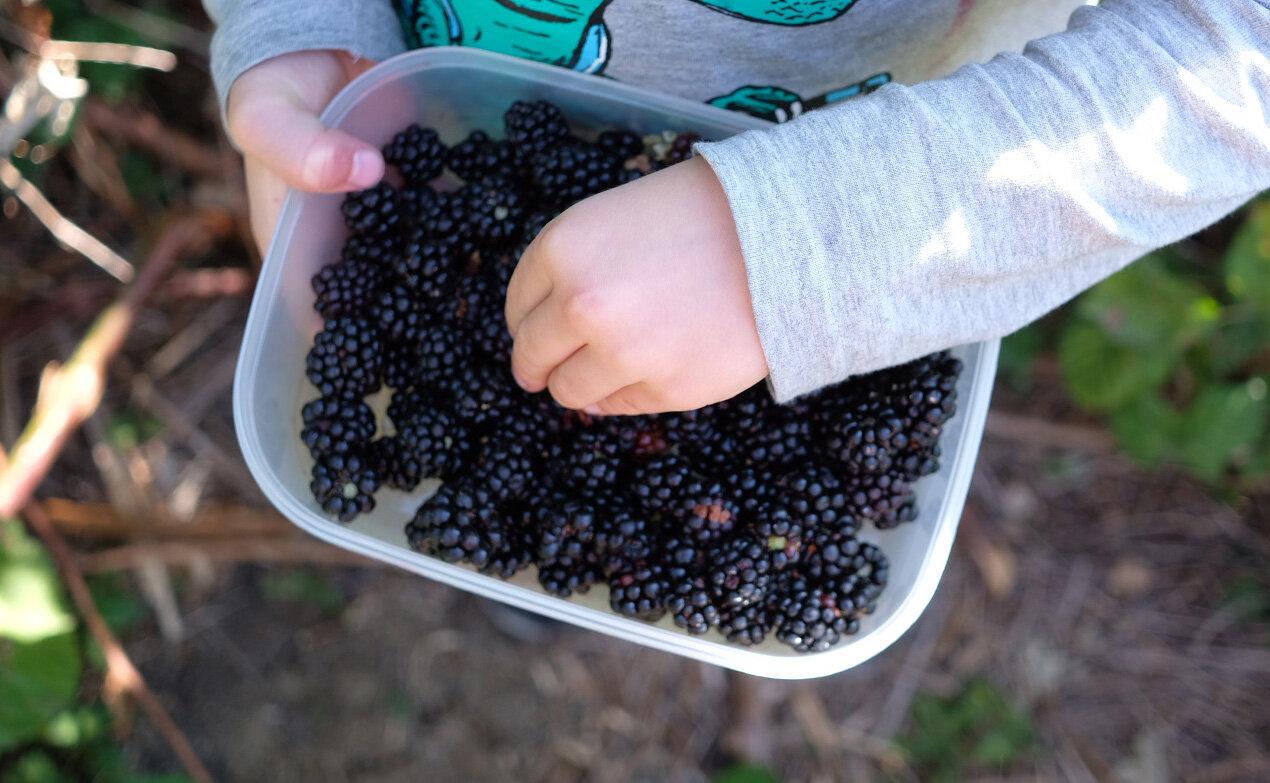 blackberry picking.jpg