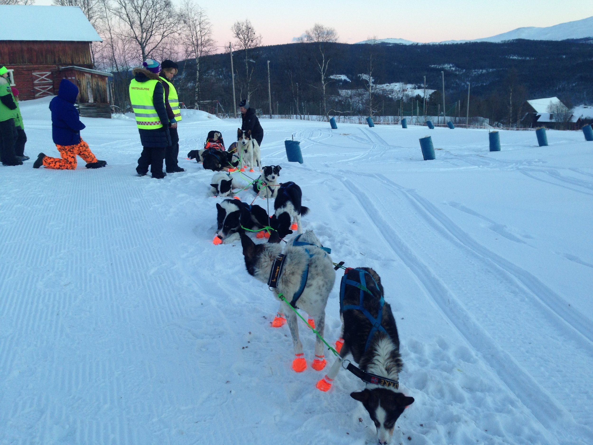 14. - 15. januar 2017 - Gausdal Maraton hundeløp, 300 km, med sjekkpunkt Skåbu