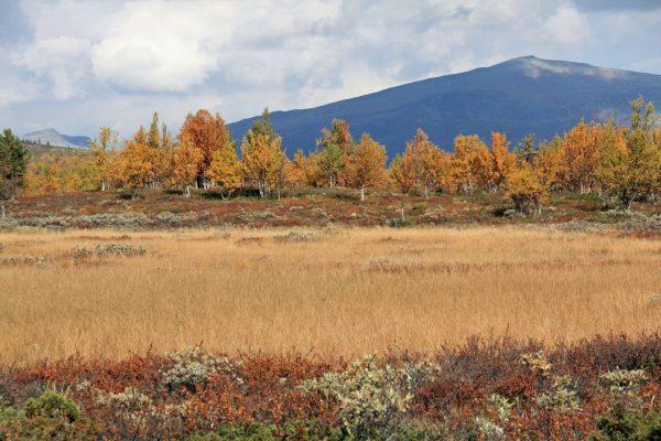 Bli med på en høsthelg i vakre omgivelser i Skåbu. FOTO: Anne Mari Lo