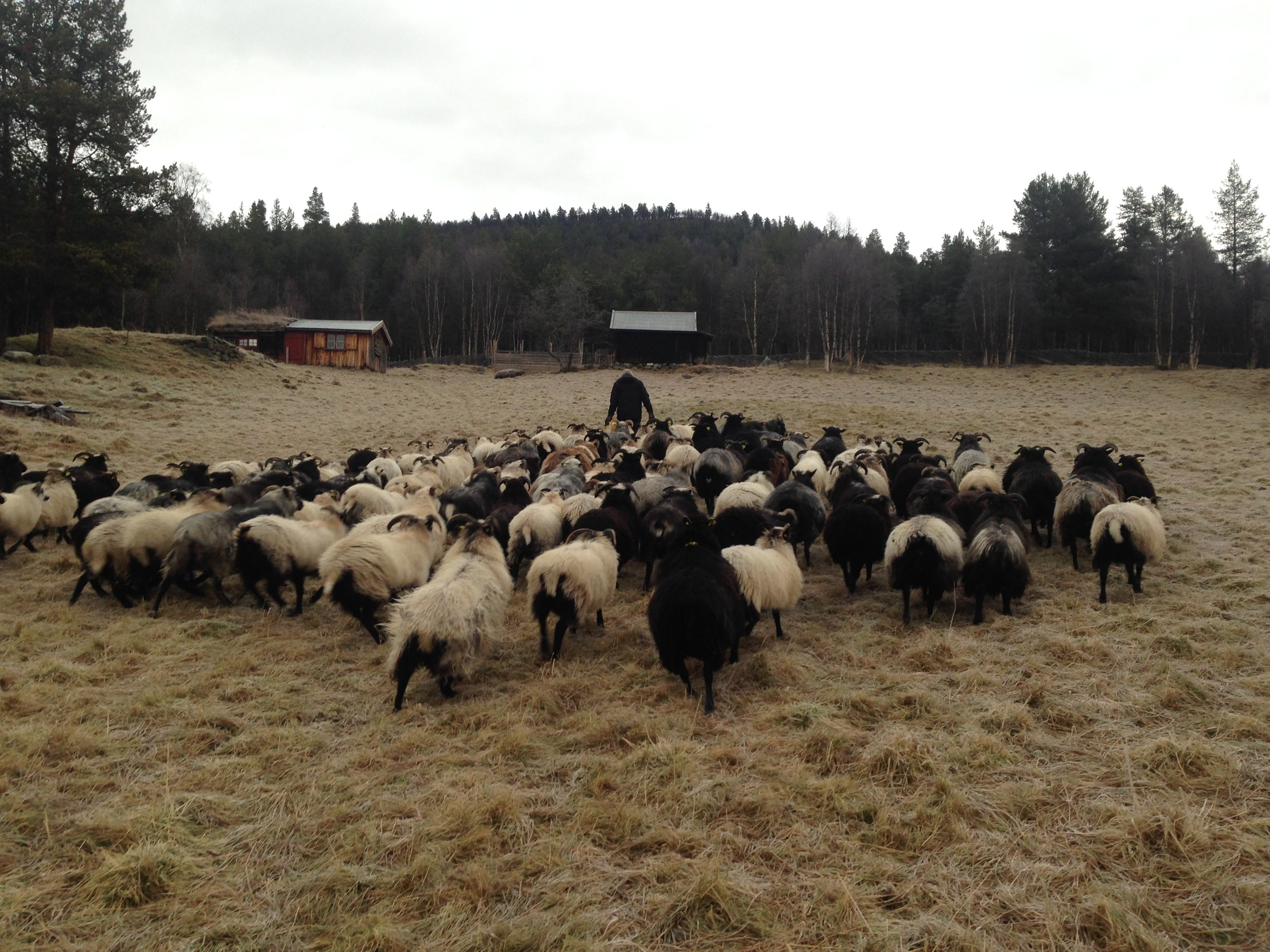2017 - da er tiden kommet for å samle flokken og gå dem hjem til gården.