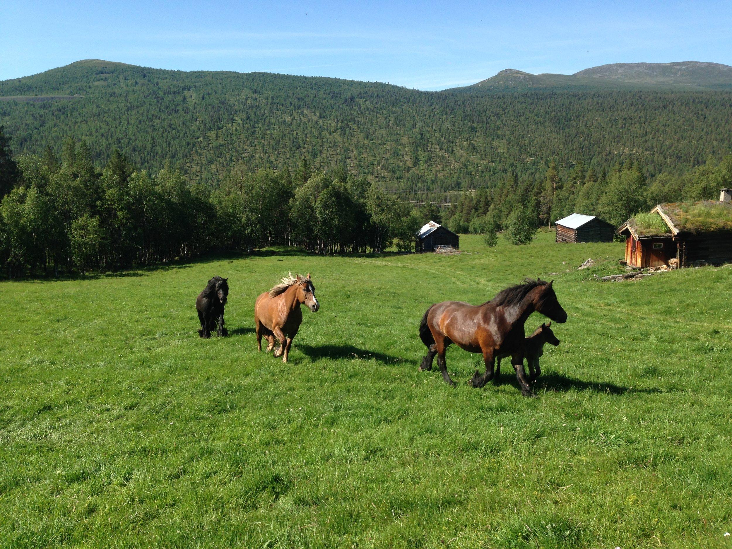 Hesteidyll på Perslåa.