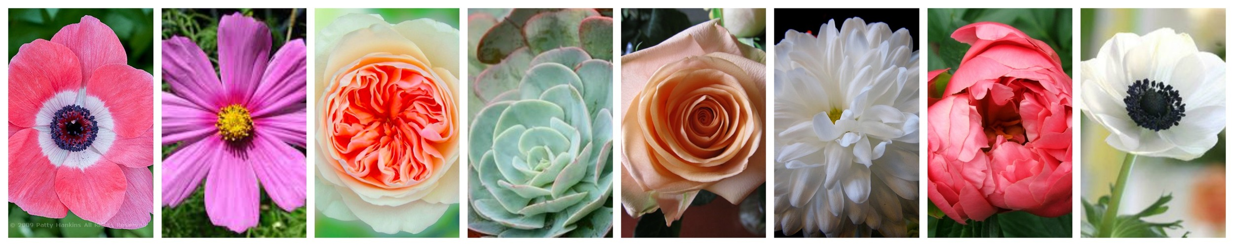 Blog Wedding Flowers Expensive Cost Pricing NZ Floral Bouquet Ideas Rustic Peonie Poppy Succulents Rose Wedding
