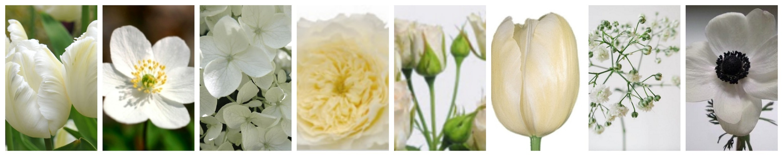 White Flower Mix Wedding Floral Design Blog NZ Tulip Hydrangea Poppy Babies Breath Why Flowers Expensive Table Flower