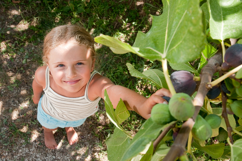 girl looking up picking fruit from vine