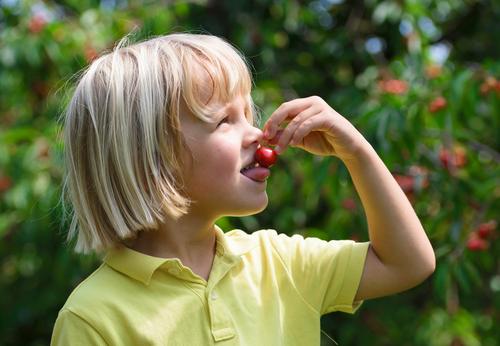 little boy eating a cherry