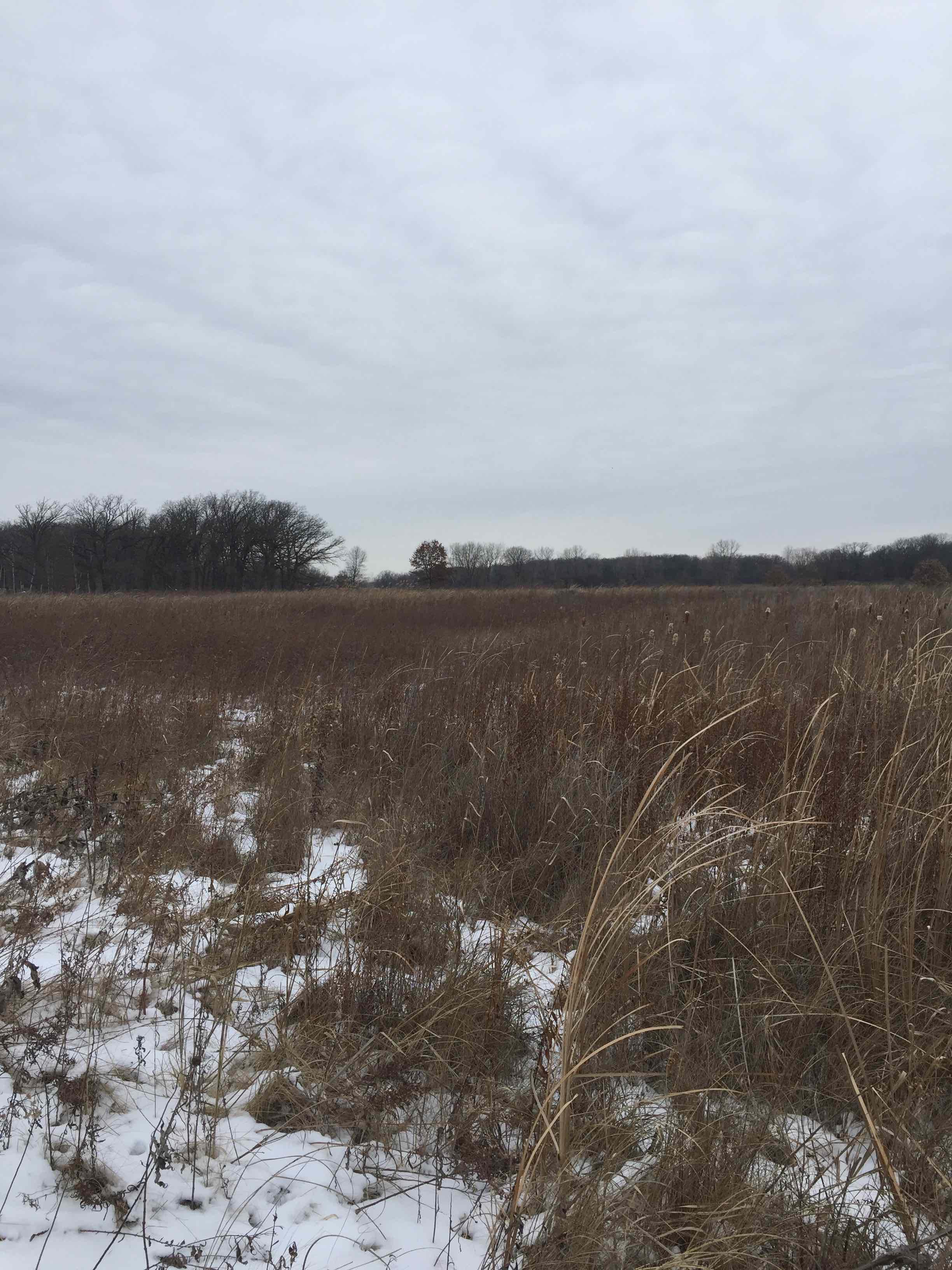 Nature Preserve actual photo showing grasses and oak treeline in the horizon.