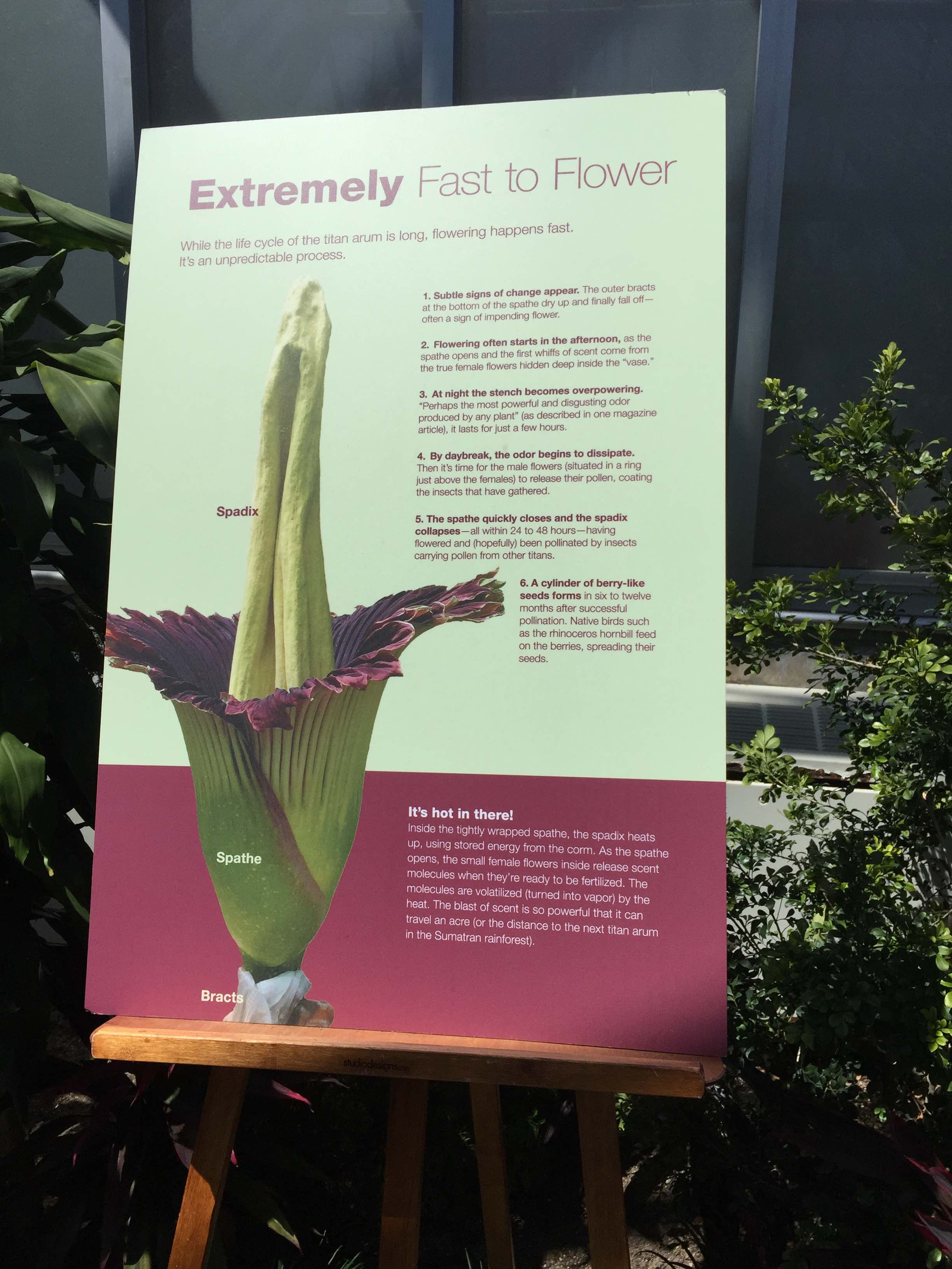Information about the Corpse Flower blooming.