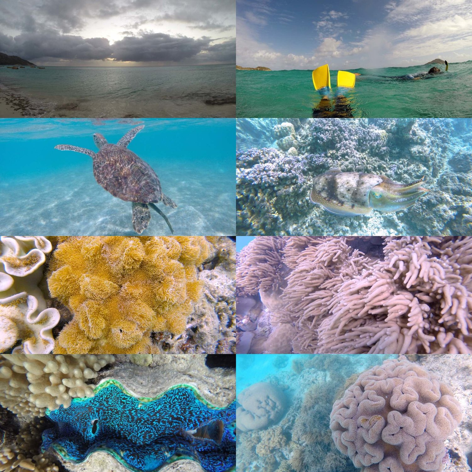 Collage of images taken by our daughter at Lizard Island, 2014. Turtles and cuttlefish are her favorites in the second row down.