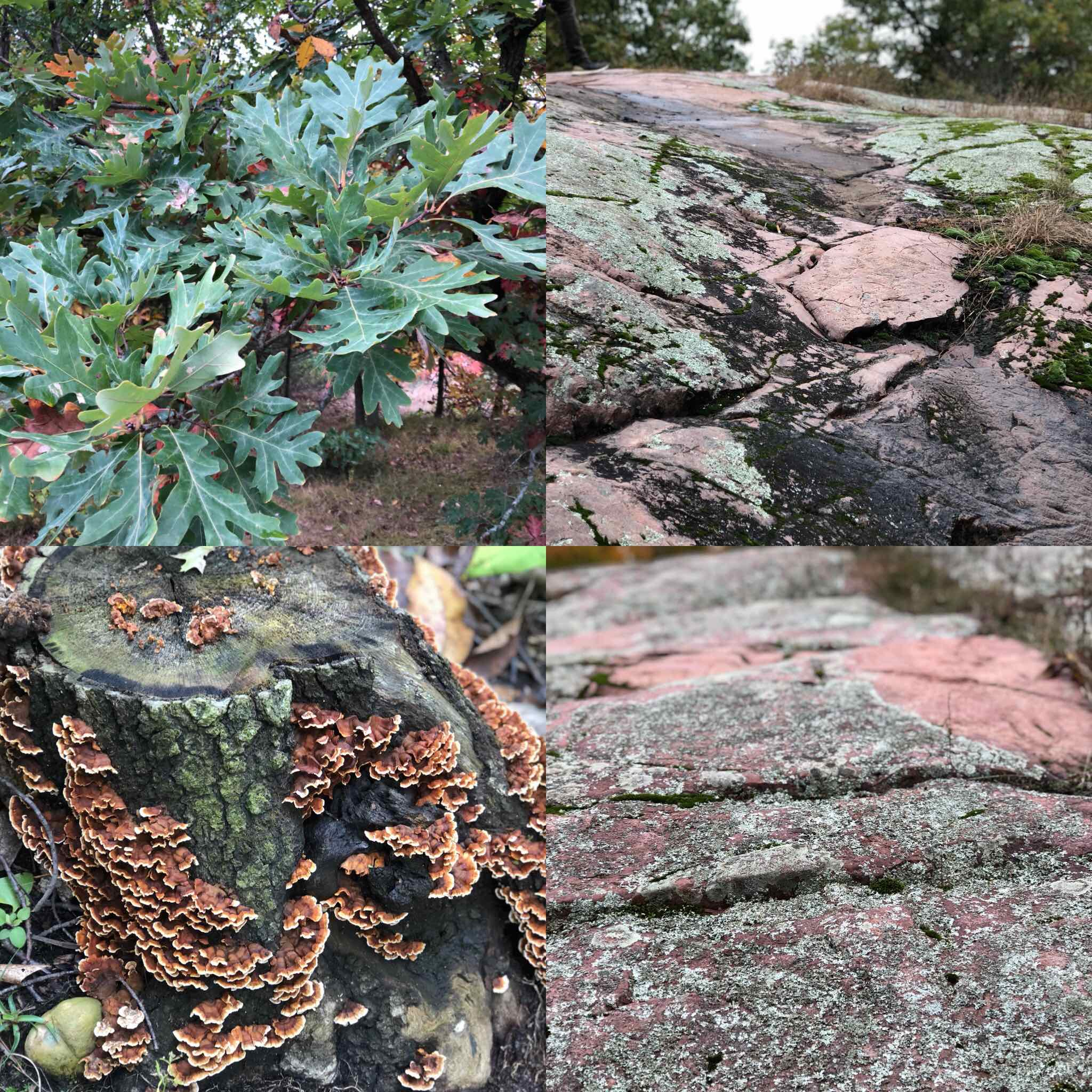 Color inspiration from hiking this weekend on Poppy's Rock In Wisconsin which is a hill of exposed glaciated smooth fine -grain pink granite.