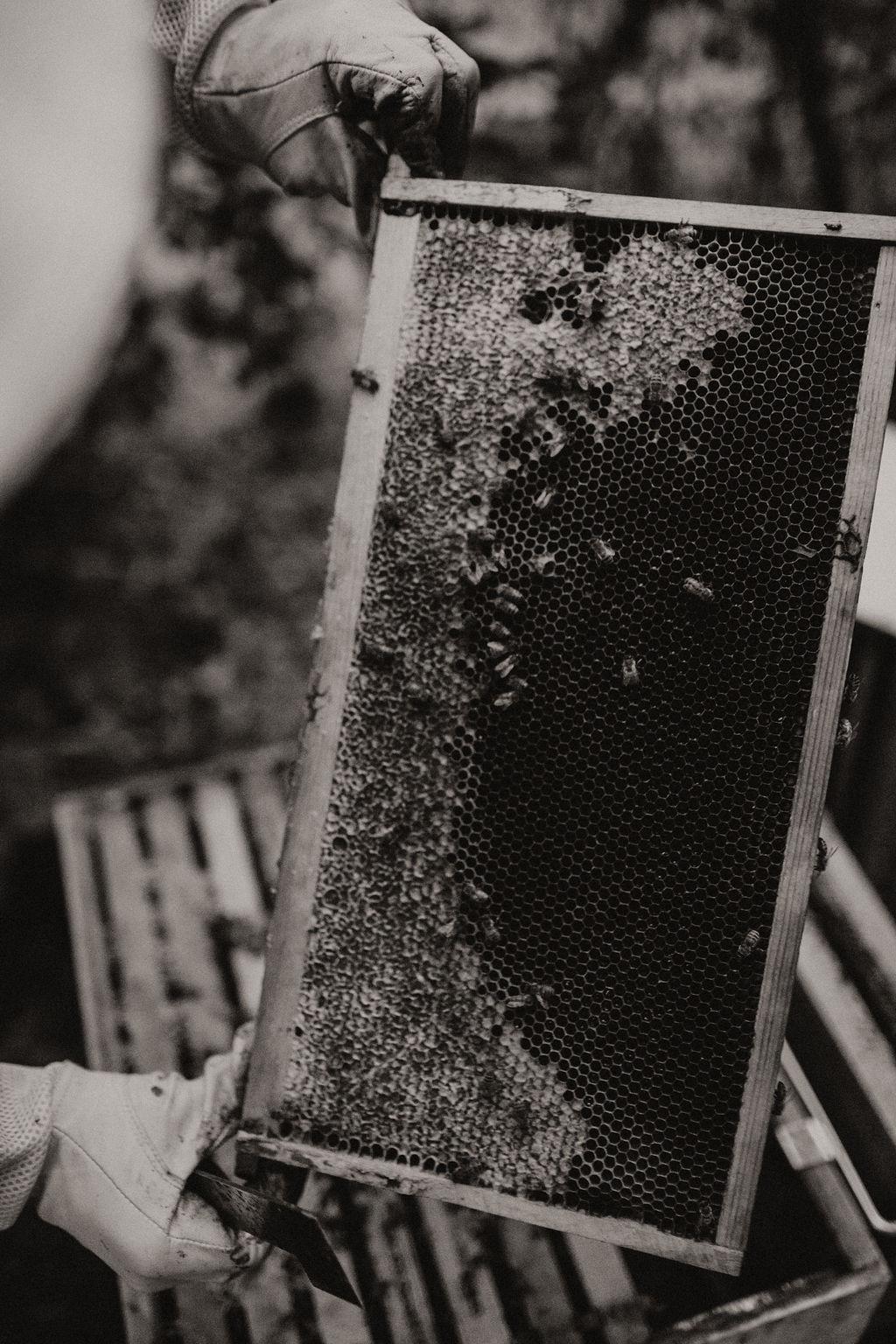 Denver Wedding Photographer, Colorado Wedding Photographer, Redden Photography, Redden, Denver Engagement Photographer, Colorado Engagement Photographer, Colorado Photographer, Denver Photographer, Buena Vista Photographer, Buena Vista Wedding, Surf Hotel Wedding, Beekeeper Wedding, Velvet Wedding Dress, Wedding Dresses that aren't white, Green Wedding Dress, Green Wedding Shoes, Surf Hotel, Surf Hotel Buena Vista, Bridal Portrait, Half up Bridal Hair, Colorado Wedding Hair, Colorado Wedding Dress, Colorado Wedding Makeup, Floral Wedding Dress, Unique Wedding Dress, First Look, Riverside Wedding, River Wedding, Colorado First Look, Field Wedding Portraits, Grooms with Long hair, Man bun grooms, Grooms with silver hair, Wedding with Dogs, Dogs at Weddings, Dog Best Man, Couples with Dogs, Couples Portraits, Buena Vista Festival Ground
