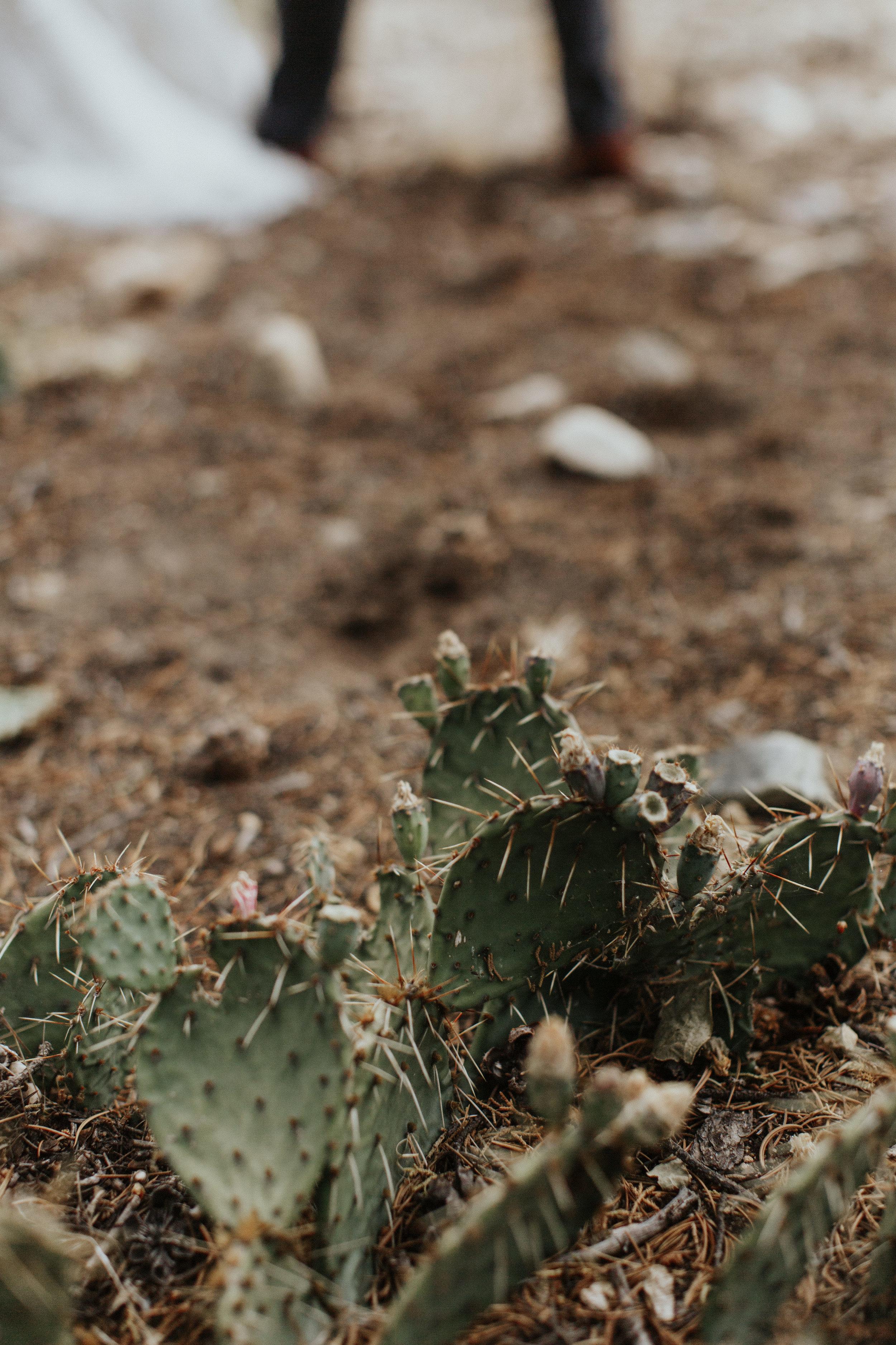 Redden, Redden Photography, Denver Wedding Photographer, Colorado Wedding Photographer, Taos Wedding Photographer, New Mexico Wedding Photographer, Fine Art Wedding Photographer, High End Wedding Photographer, Denver Photographer, New Mexico Wedding, Taos Wedding, Mountain Wedding Photographer, Adventure Wedding Photographer, Wedding Cactus