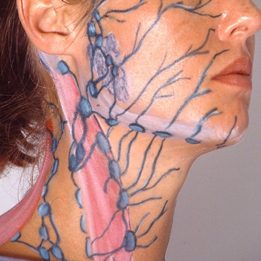 Areas of impact for lymphatic massage - Face and Neck
