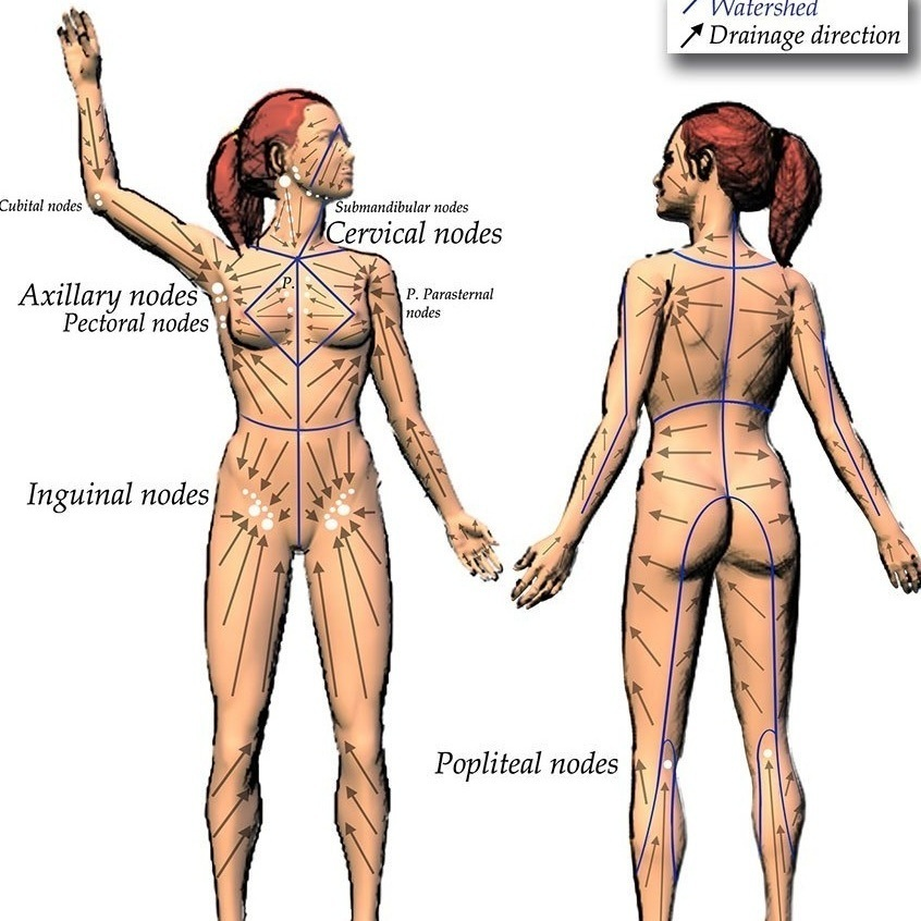 Lymphatic Drainage map - Whole Body