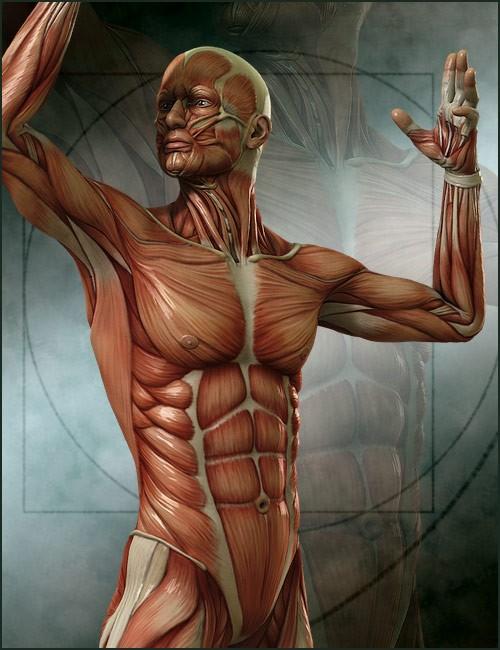 michael-4-muscle-maps-2.jpg