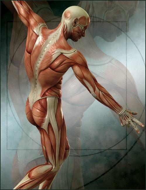 michael-4-muscle-maps-4.jpg