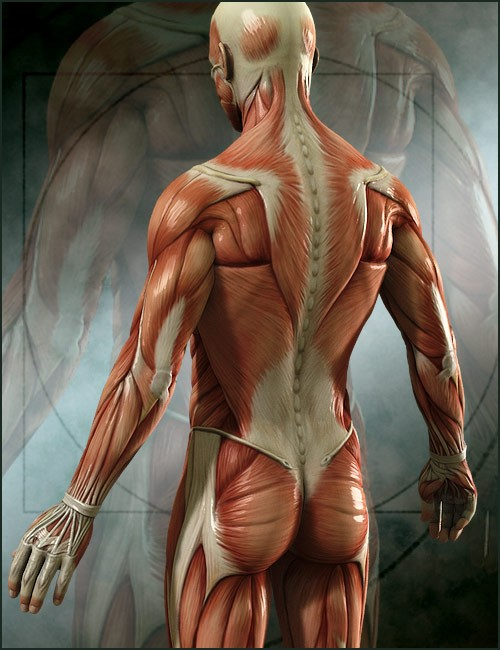 michael-4-muscle-maps-1.jpg