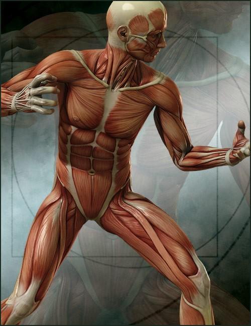 michael-4-muscle-maps-5.jpg