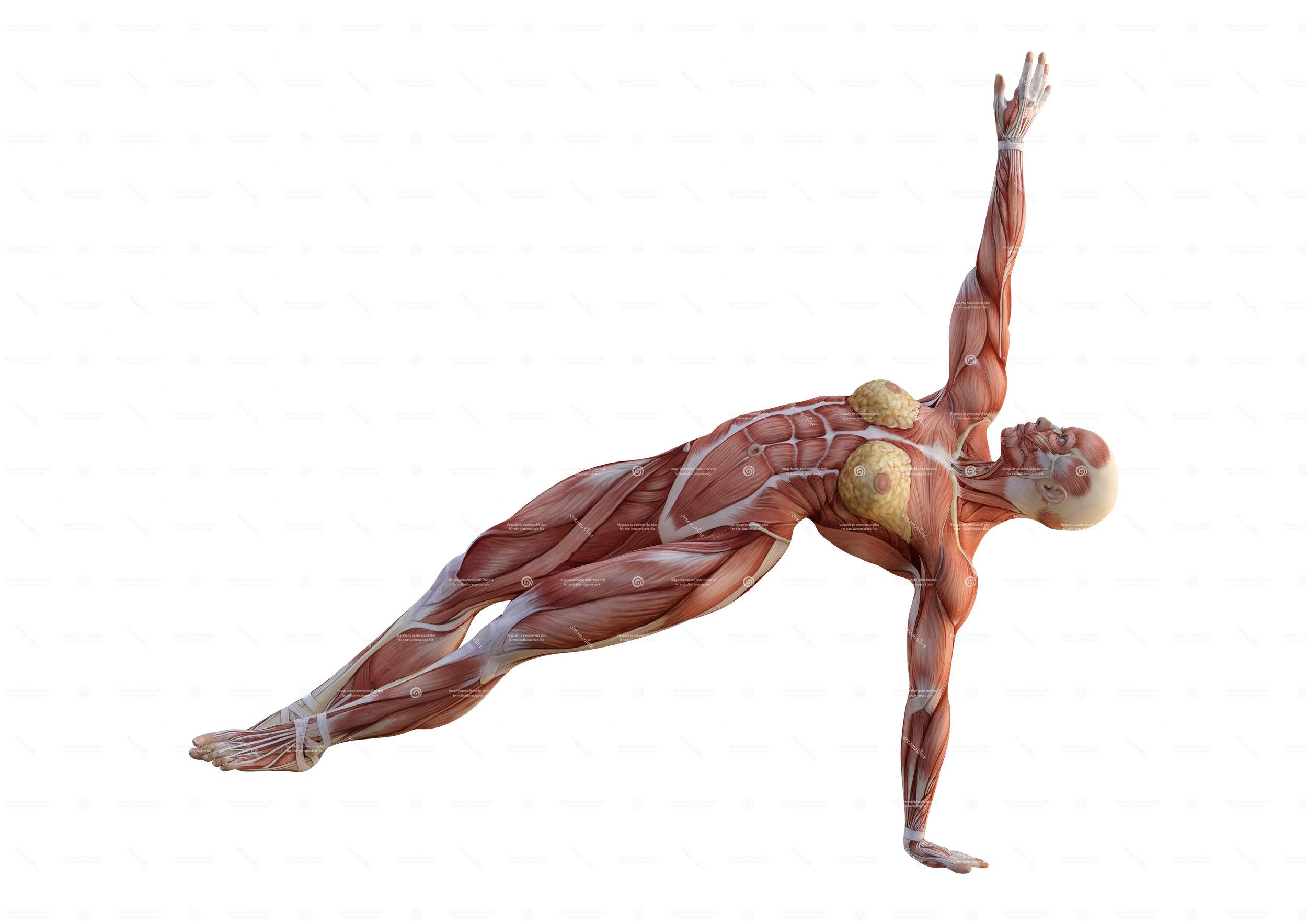 female-plank.jpg
